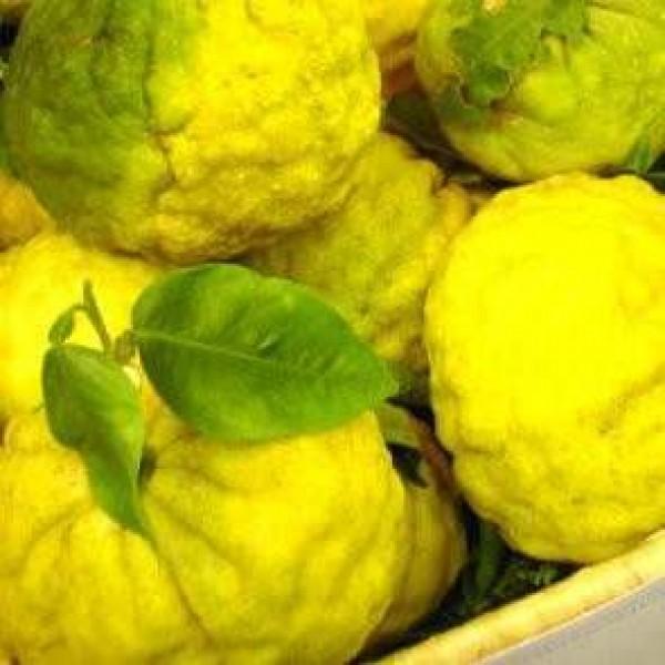 Jus de citron Yuzu Sélection (6 x 360 ml)