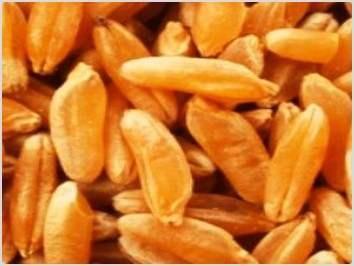 Graines et céréales