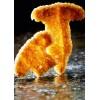Chips à frire Kroepoek forme champignon, 700 pièces